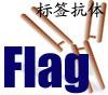 Flag标签抗体