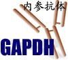 GAPDH内参抗体