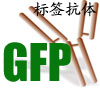 GFP标签抗体