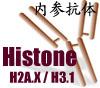 组蛋白Histone核内参抗体