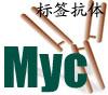Myc标签抗体