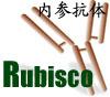 植物Rubisco内参抗体