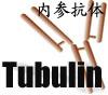 Tubulin内参抗体