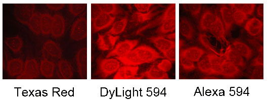 DyLight 594与Texas Red及Alexa 594荧光染料比较